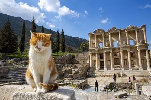 遺跡に座る猫