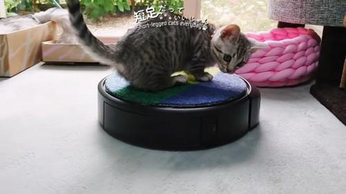 ロボット掃除機に乗って振り向く猫