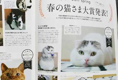 猫さま大賞