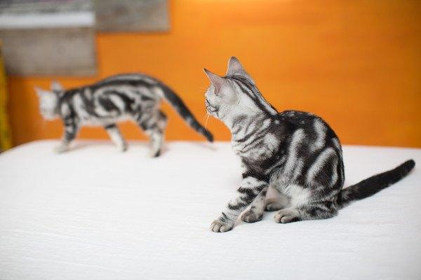奥にいる猫を見つめる子猫