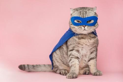 スーパーヒーローのウイスキー猫
