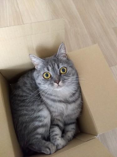 #箱入り猫単体#