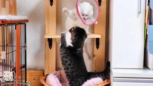 キャットウォークでケンカする猫