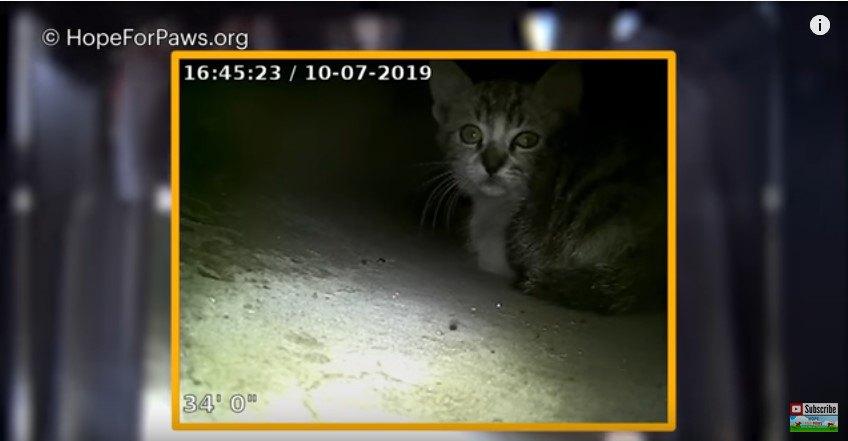 スクリーンで見る子猫