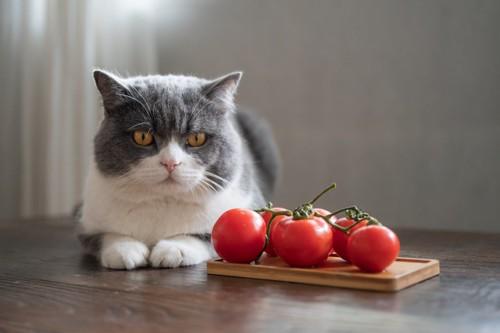 トマトの横に座る猫