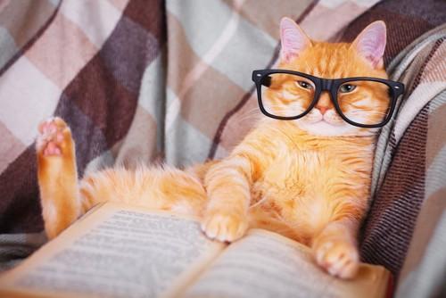 メガネをかけて本を読む猫