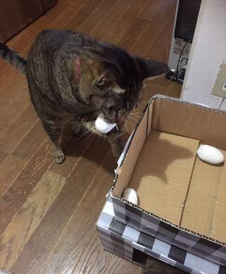 猫がボールを口に銜えている