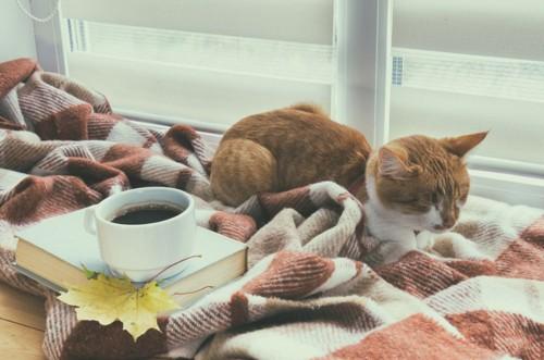 猫とコーヒーと本