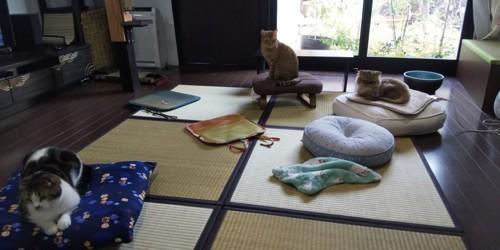 猫桜屋店内