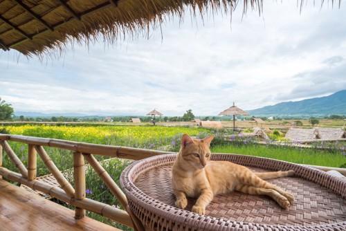 優雅に居る猫
