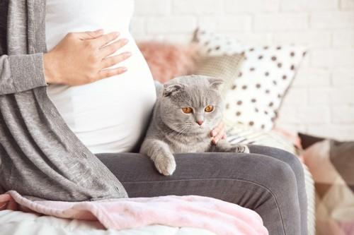 妊婦さんと猫