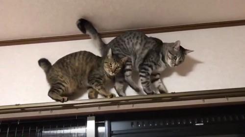 バックで進む猫