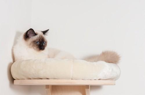 ディアウォールを使った高いところのベッドでくつろぐ猫