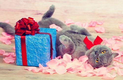 プレゼントの箱と猫