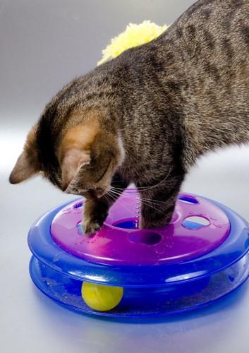 知育玩具で遊ぶ猫