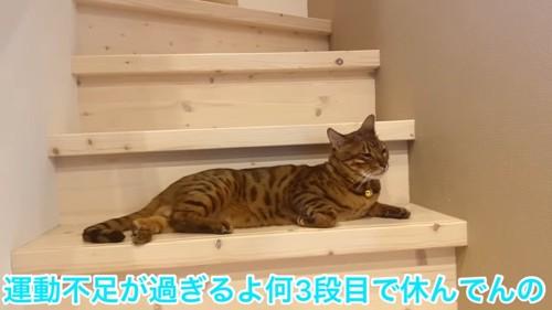 階段で寝そべる猫