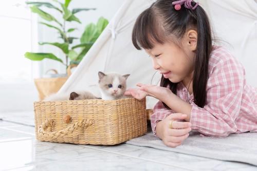 子猫に優しくする少女