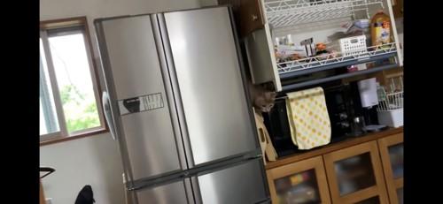隙間から出てくる猫