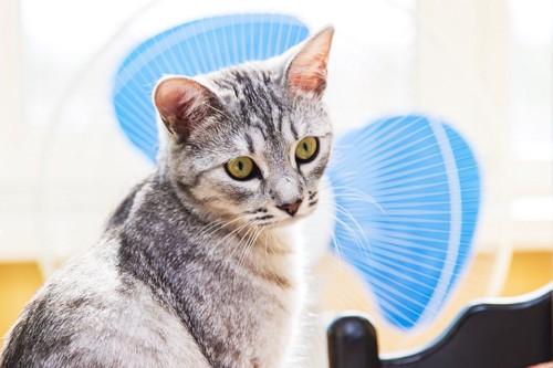 扇風機の前に座る猫