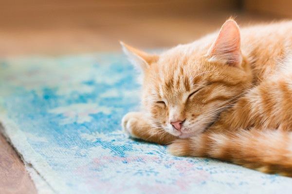 絨毯の上で寝る猫