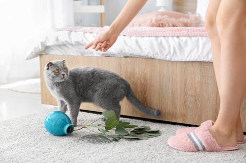 花瓶を落として叱られる猫