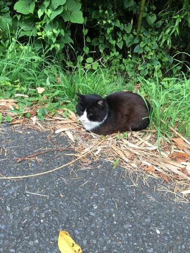 道の途中にいた猫