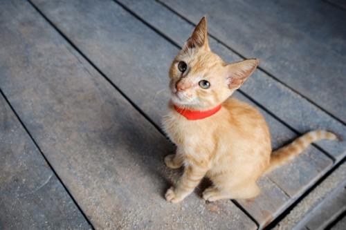 赤い首輪の猫