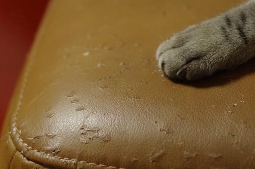 椅子の上に置かれた猫の手と爪の跡