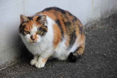 警戒している様子の猫