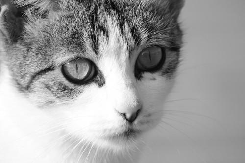 ボーッとした様子の猫の顔アップ