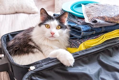 開いたスーツケースの中の衣類と猫のフードと中に入っている猫