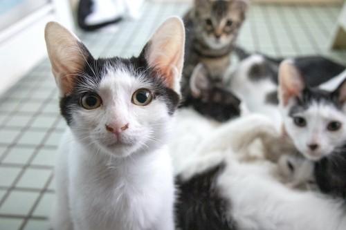 こちらを見つめる猫たち
