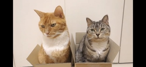 箱に入って落ち着く猫