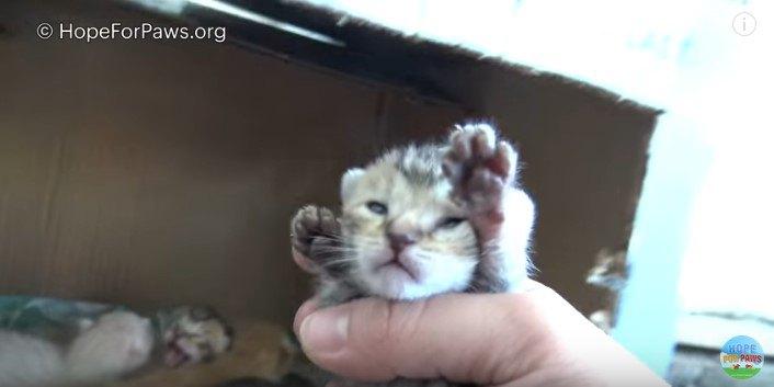 子猫を手づかみ