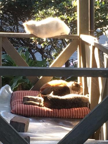 日向ぼっこしてる猫たち