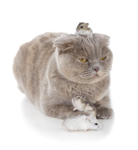 猫の上に乗るハムスター