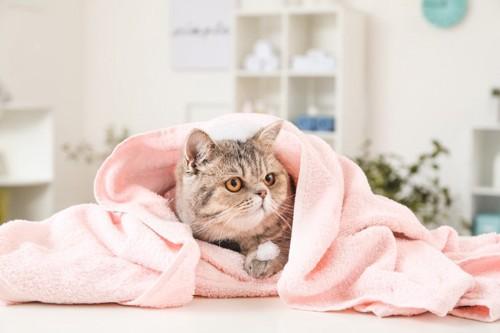 柔らかいタオルにくるまっている猫