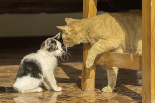 子猫に近づいて匂いを嗅ぐ茶トラ猫