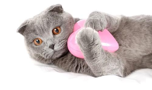 ハートのおもちゃを抱く猫