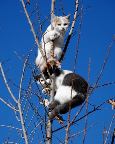 降りられない猫