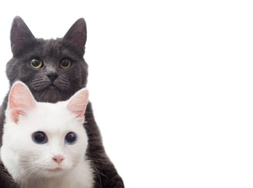 白猫、黒猫