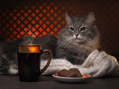 コーヒーとチョコレートの前でくつろぐ猫