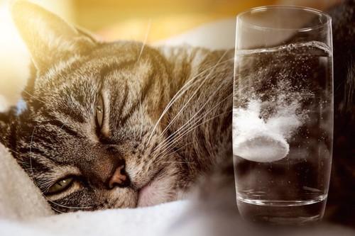 薬が溶けている水と眠そうな猫