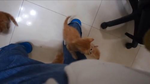 後ろから登る猫