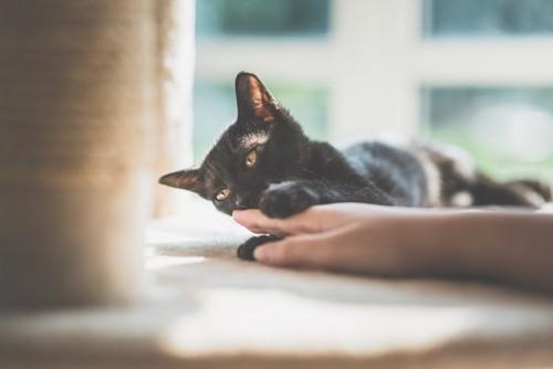 飼い主の手に手を乗せる黒猫