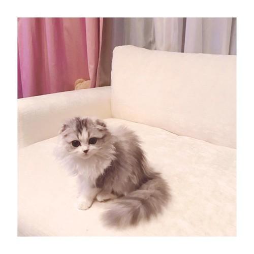 こじはるの猫、けむしちゃん