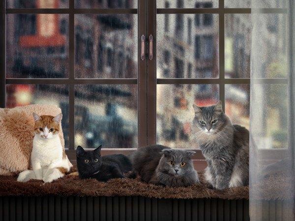 窓に集まる猫4匹
