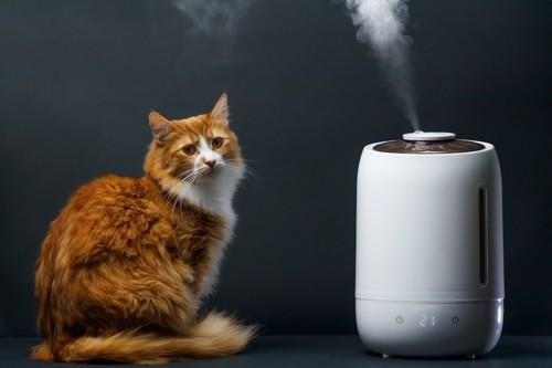 加湿器の隣に座る猫