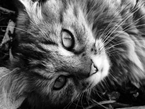 モノクロ写真の猫