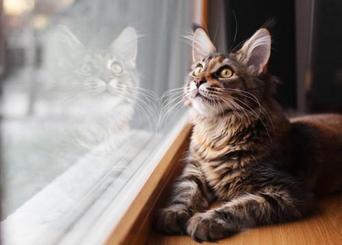 外が気になる猫